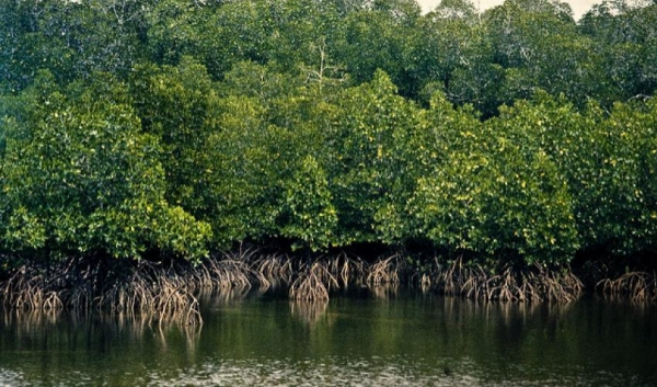 Private Tour: Mangroves